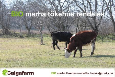 bio marha tőkehús a galgafarmtól